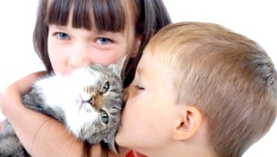 Фото - Алергія на шерсть кішок