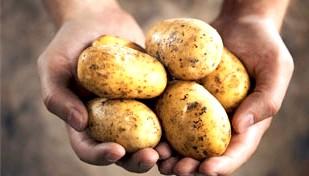 Фото - Алергія на картоплю