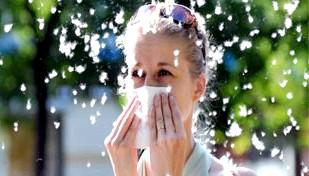 Фото - Алергія на тополиний пух