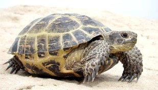 Фото - Алергія на черепах
