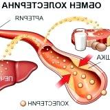 Фото - Фото - Функції холестерину в організмі людини