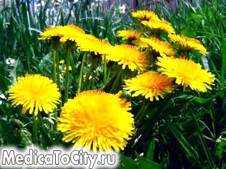 Фото - Ця рослина - наш друг при багатьох проблемах. Допоможе він і цього разу!