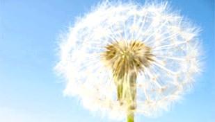 Фото - Чи загрожує вашому здоров'ю алергія?