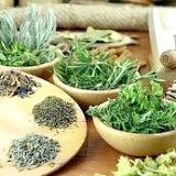 Фото - Фото - Лікування лікарськими травами шкода чи користь