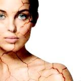Фото - Фото - Лікування сухої шкіри народними методами