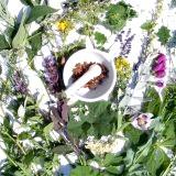 Фото - Фото - Народні методи лікування алергії