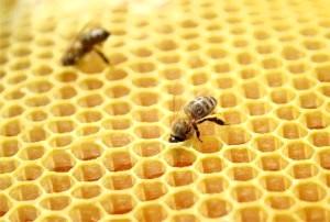Фото - Апіфітотерапія -лікування отрутою бджіл
