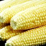 Фото - Фото - Корисні властивості кукурудзяної олії
