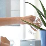 Фото - Фото - Найкорисніші для здоров'я кімнатні рослини