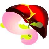 Фото - Фото - Захворювання жовчного міхура в організмі