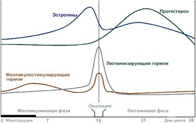 Фото - Графік розвитку гормонів у жінки
