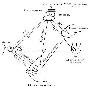 Фото - Схема розвитку пред ракових захворювань