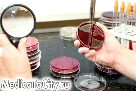 Фото - дослідження крові на бактерії