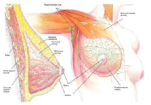 Фото - Огляд фіброзно-кістозної мастопатії