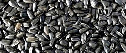 Фото - Алергія на насіння