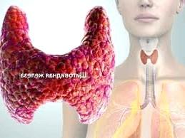 Фото - щитовидка норма